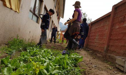 Estudiantes de Escuela El Sauce participan en taller de huertos escolares